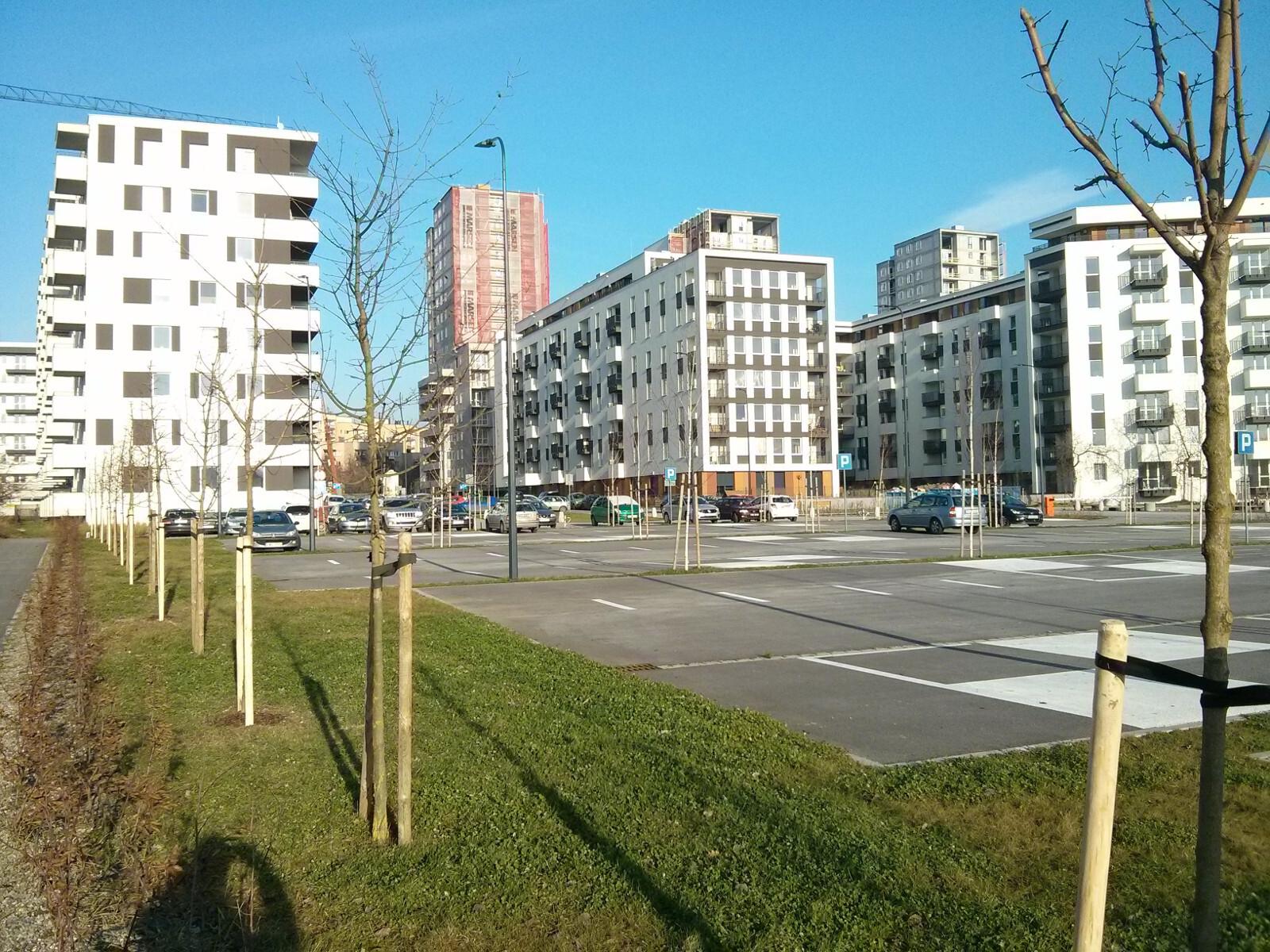 Nowe drzewa posadzone przez dewelopera Budimex obok parkingu na Orlińskiego