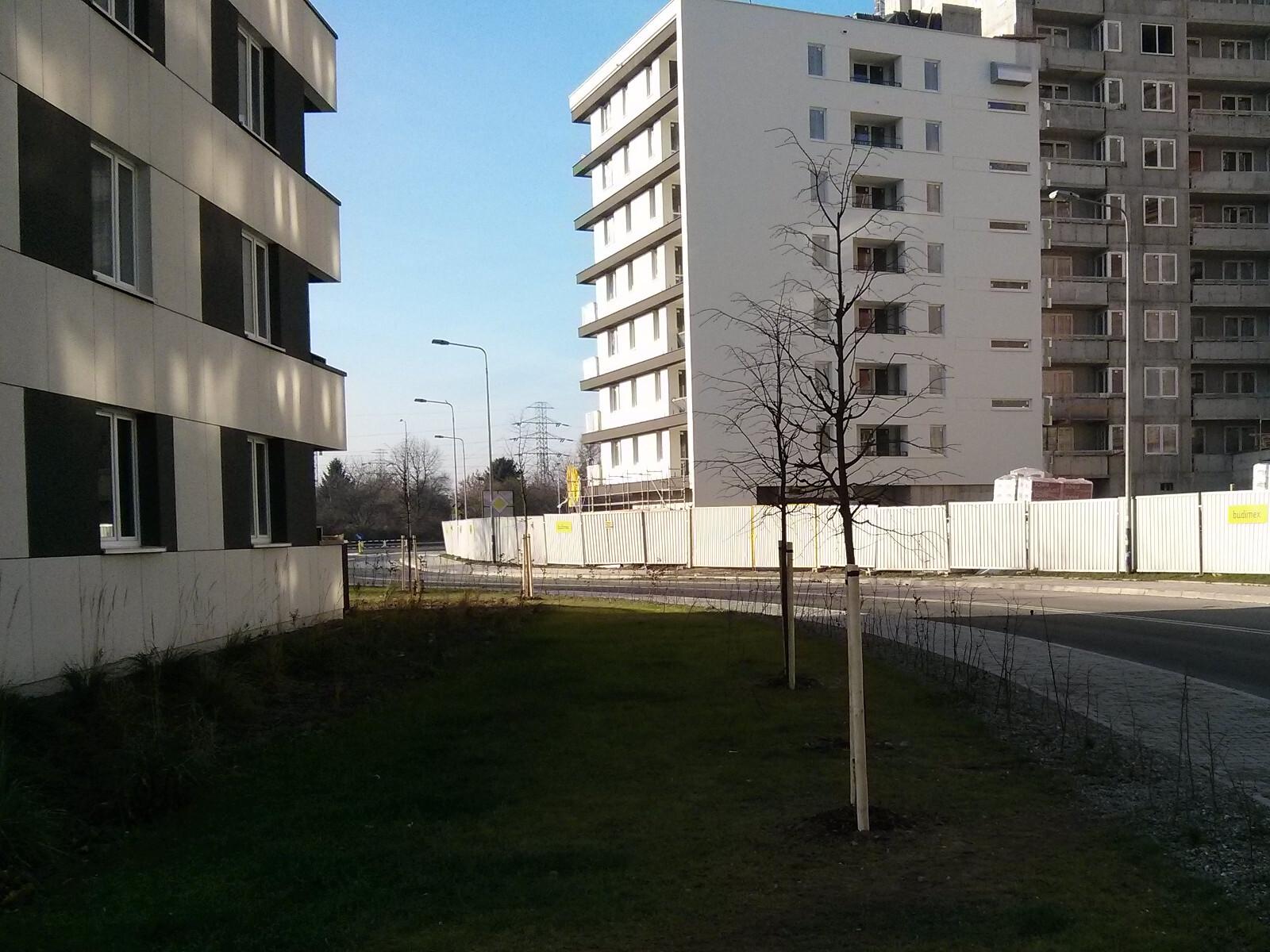 Nowe drzewa w Czyżynach obok bloku Orlińskiego 4