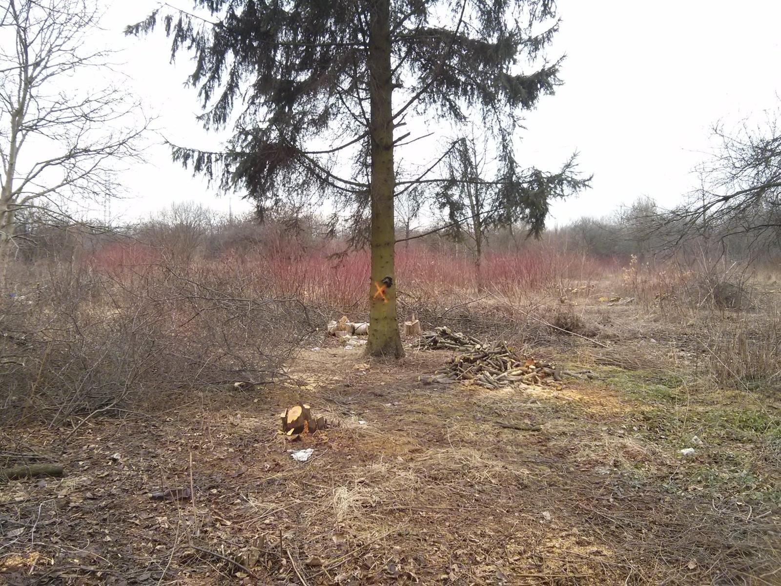 Oznaczenia na drzewach z terenu wycinki