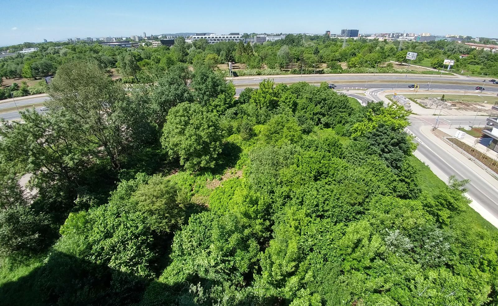 Drzewa i zieleń w Czyżynach, a miejscu, w którym ma powstać nowy park